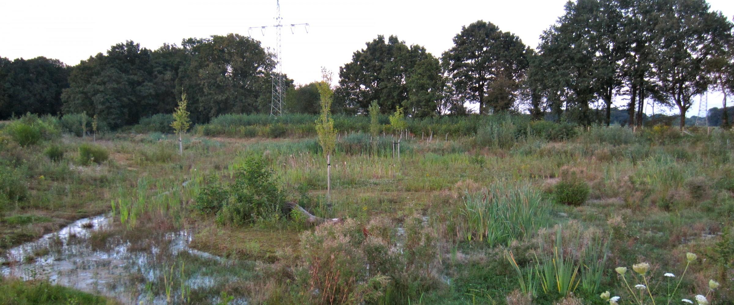 Erdbach Renaturierung Garten- und Landschaftsbau Essen Dorsten Ruhrgebiet Dorsten Bottrop Gladbeck _0114