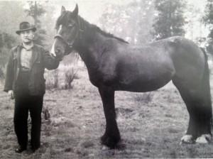 1938 Franz Suden mit seinem ersten Zugpferd